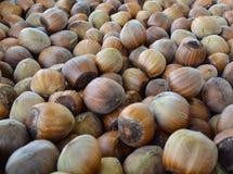 Hazelnoten, maïskolf en hazelnootnoot Royalty-vrije Stock Fotografie
