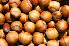 Hazelnut. This is a bundle of hazelnuts in shell, like nice nature background Royalty Free Stock Image