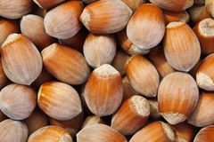 Hazelnut. Background of broun hazelnut close up Stock Image