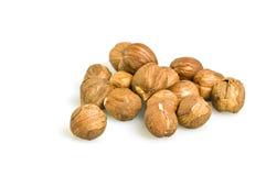 Hazelnut. Photo of hazelnuts without shell on white background Royalty Free Stock Photos