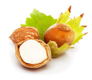 hazelnut Obraz Royalty Free