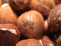 Hazelnut Royalty Free Stock Photos