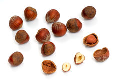 Hazelnut - 2 Royalty Free Stock Images