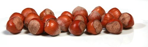 Hazelnut Stock Image