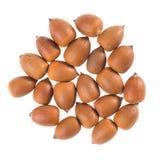Hazelnut. Some hazelnuts in front of white background Stock Image