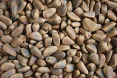 Hazelnut. Closeup shot, horizontal background Stock Images