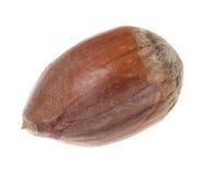 Hazelnut. Isolated on white background stock photos