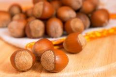Hazelnut Fotografia Stock