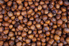 Hazelnut Obrazy Royalty Free