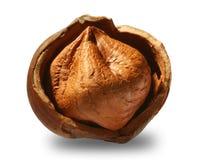 Hazelnut. A cracked hazelnut isolated on a white background Stock Images