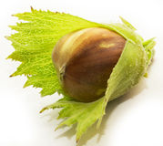 hazelnut Fotos de Stock Royalty Free