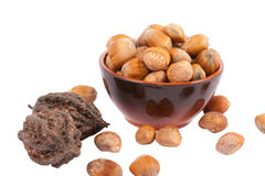 hazelnut Foto de Stock Royalty Free