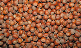 Hazelnut. View of fresh hazelnuts - hazelnut background Royalty Free Stock Image