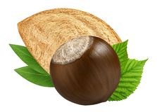 Hazelnut and almond isolated closeup with leaf as package design elements. Fresh filbert on white background. Macro two Nuts. stock photography