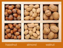 Hazelnut, almond, and walnut Stock Photo