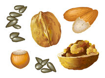 Hazelnut_almond_walnut_seed Photographie stock libre de droits