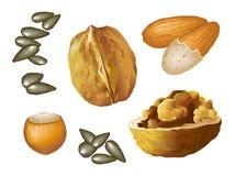 Hazelnut_almond_walnut_seed Fotografia Stock Libera da Diritti