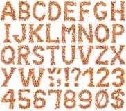 Hazelnut Alphabet Cutout Stock Images