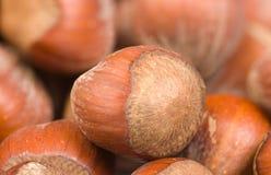Hazelnut background Stock Images