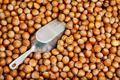 Hazelnut background Stock Photography