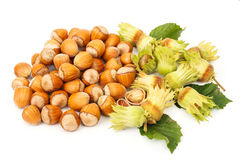 Hazelnut bunch Royalty Free Stock Images