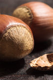 Hazelnut close-up Stock Photography