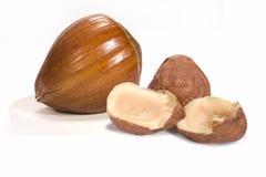 Hazelnut close-up Stock Image