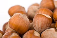 Hazelnut close-up isolated Royalty Free Stock Photo
