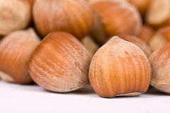 Hazelnut close-up isolated Royalty Free Stock Photos