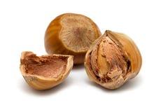 Hazelnut close up Stock Photography