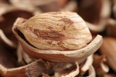 Hazelnut closeup Stock Photos
