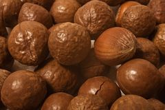 Hazelnut closeup Royalty Free Stock Images