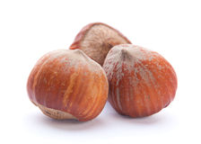 Hazelnut closeup Stock Image