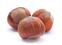 Hazelnut closeup Stock Images