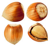 Hazelnut. Collection of nuts isolated on white Royalty Free Stock Photography