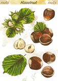 Hazelnut color Stock Photo