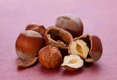 Hazelnut cracked Royalty Free Stock Image