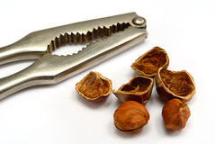 Hazelnut cracked open with nut cracker Stock Photo