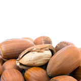 Hazelnut cutout Stock Photography
