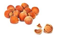 Hazelnut or filbert nut Stock Image