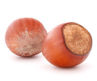 Hazelnut or filbert nut isolated on white background cutout Royalty Free Stock Photo
