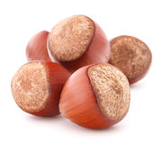 Hazelnut or filbert nut isolated on white background cutout Stock Photo