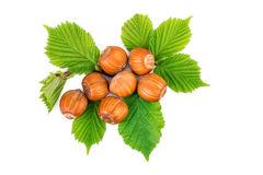 Hazelnut or filbert nuts with leaves on white. Flat lay, top view.  Royalty Free Stock Images