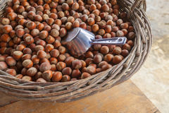 Hazelnut or filberts Stock Photography