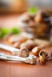 Hazelnut Stock Images