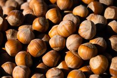 Hazelnut. Fresh organic filbert on white background. Nut macro. Bright sunlight gives sharp shadows