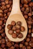 Hazelnut fruit Stock Images