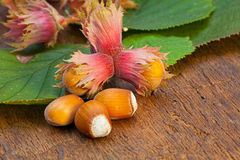 Hazelnut fruits and green leaves Stock Photo