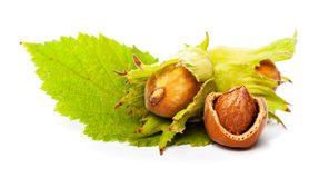 Hazelnut with green leaf Royalty Free Stock Photos