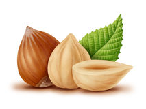Hazelnut and green leaves Royalty Free Stock Photography